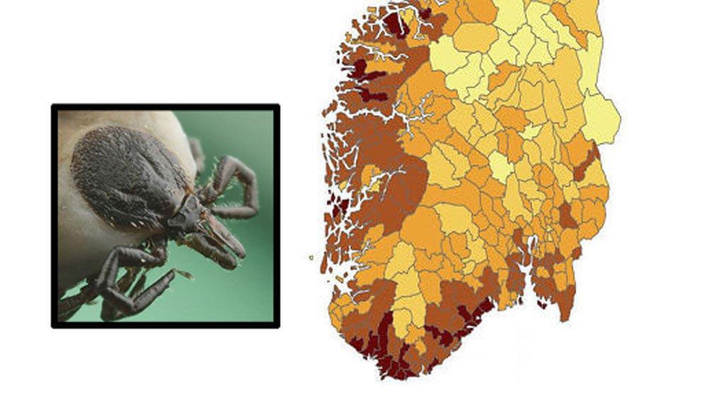 flått kart norge Romerikes Blad   Dette er de norske flått fylkene flått kart norge