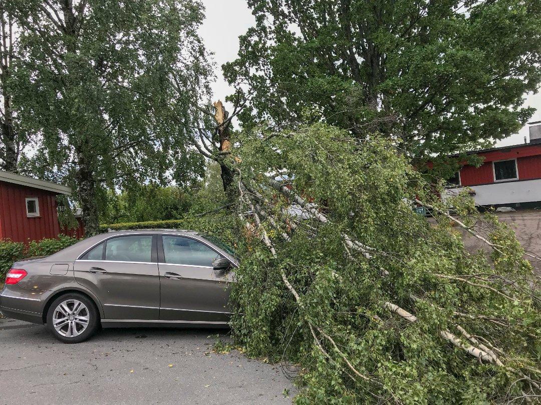 Stormskader for millioner i Sør-Norge - og regningen vokser