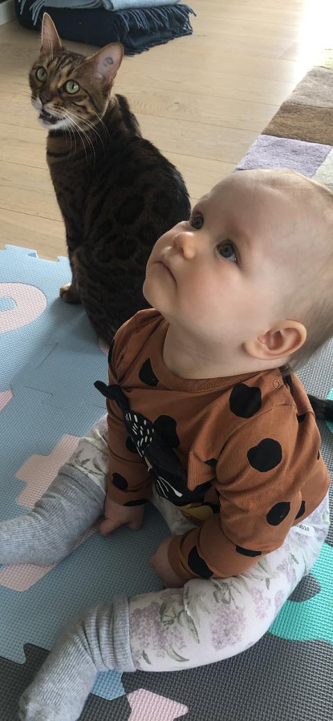 Kjendiskatten Sala er nå hjemme hos Ada V. Sjølshagen-Nes på 10 måneder, matmor Astrid Sjølshagen og matfar Michael Nes.