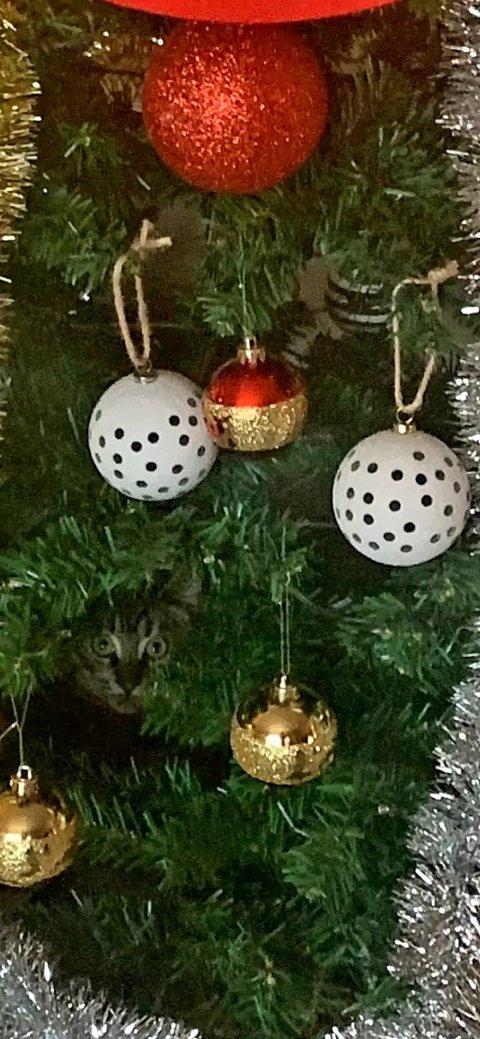 Vilter julekule: Fotograf Benedicte Tangeland spør om du kan finne feilen.