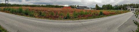 Panorama: Tomten som er ryddet på Hensmoen.