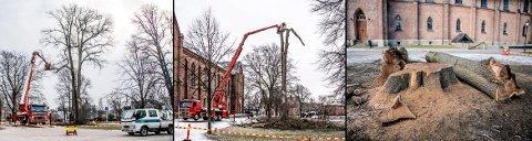 ROTA IGJEN: Denne uka startet arbeidene med å fjerne et gedigent og gammelt almetre i Kirkeparken.  Onsdag var det bare rota igjen av det tidligere så staselige almetreet.