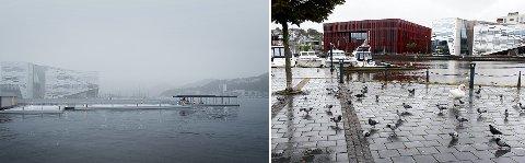 Leder av Norsk ornitologisk forening i Stavanger- og omegn, Stein Tofte, sier ja takk til begge deler.