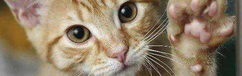 DUMPING: Særlig kattunger dumpes ved sommerferien.