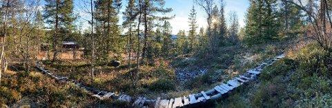 VEI: Bildet fra trasé for ny vei på Storli. Nytt veinett vil betjene flere hytter som tidligere kun nås til fots eller på ski.