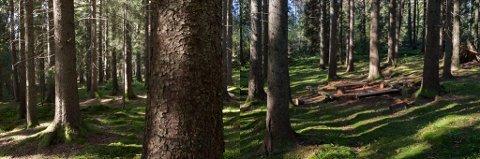 SKOGEN: Den tapte skogen er tema i Gevings fotografier.