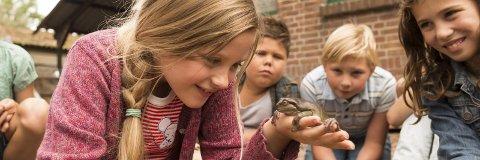 «Lærer Frosk»