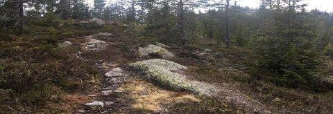 SMÅSKOG: Bilde fra plandokumentene. De nye tomtene kommer i småskogen sør-øst for Blefjell i Kongsberg kommune.