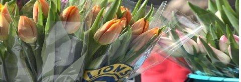 Lionsklubben i Spydeberg skulle solgt tulipaner for 60.000 kroner. Men aksjonen er avlyst.
