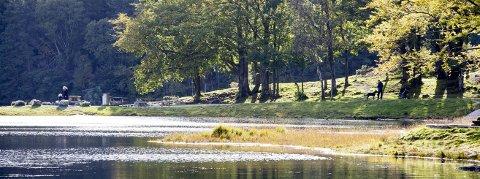 Fine høstdager: Til og med mandag kan du nyte høstsola. For eksempel i Djupadalen der dette bildet ble tatt høsten 2013.Arkivfoto: Lillian Haug Sortland