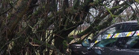 HER ENDTE TUREN: Bilen traff et tre på Vestre Karmøyveg onsdag morgen.