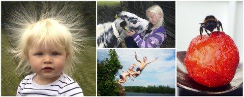 SOMMERMOTIVER: Dette er noen leserbilder fra tidligere års fotokonkurranse om sommeren. Send inn dine bilder i år!