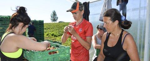 SLUTT: Jordbærsesongen var over rekordtidlig hos Rune Hagelund i år. Johanna og Kamilla kontrollerte bærene til Daniel Helli. Arkivfoto
