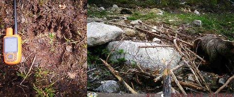 BJØRN: Ved siden av peileren er det bjørnespor, og til høyre i bildet fra viltkameraet er bjørnen. Bildet er hentet fra søknaden om skadefelling som Alvdal kommune har sendt.