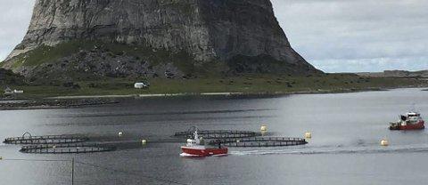 Enorme verdier: Norge står for 95 prosent av all produsert oppdrettslaks i verden, bildet er tatt på Træna i august. Vil landbasert oppdrett overta og true arbeidsplasser langs kysten?  8Foto: Øivind Lågbu