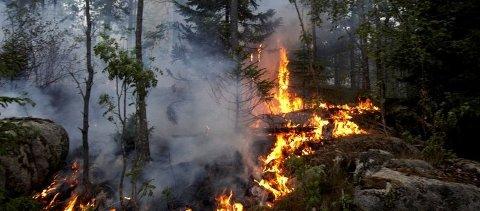 Fort gjort: Bildet er fra en skogbrann i Råde for noen år siden. Det var da mistanke om at en engangsgrill var årsaken til brannen. Det er nå stor lyng- og skogbrannfare i hele vårt distrikt.