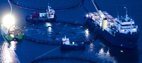 Bilde viser avlusning med Marine Harvest i Kvænangen. Her brukes ikke stoffene som er omtalt i artikkelen, men hydrogenperoksid som raskt omdannes til vann og oksygen.