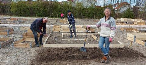 Det var mange som ønsket å plante blomster, grønnsaker og andre typer frø på Begby. Nå er den nye parsellhagen så å si «fullbooket». Her med Helge Kolstad, Willy Gustavsen og Elin Solheim.