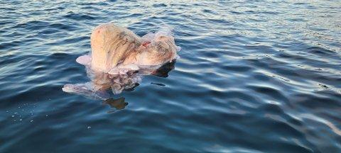 FLØT I SJØEN: 110-sentralen fikk melding om at noe merkelig fløt i sjøen.