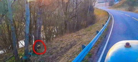 FARLIG: Legg merke til den røde ringen på bildet, som markerer hvor beveren nesten har gnagd seg gjennom oretreet. Jon Torjus Alten frykter at treet kan falle inn på veien allerede natt til mandag, og vil advare bilister om faren.