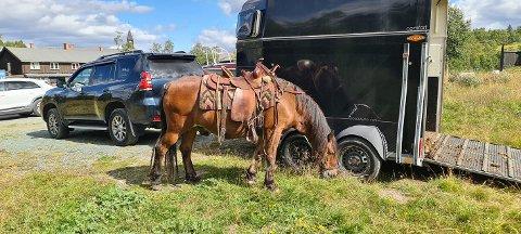 GÅTT SEG VILL: I fem dager har Rauen vært borte. Hesten er observert på vei mot Åmotsdal. Her er hesten fotografert ved Skinnarbu, hvor han sleit seg fra grima og stakk av.   (Foto: Privat)