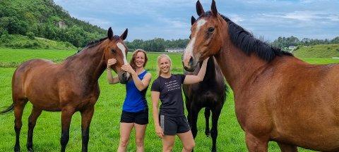 LINSELUS: Den eine hesten ville vere med på alle bildene, same kor mykje søstrene prøvde å få andre hestar i fokus.
