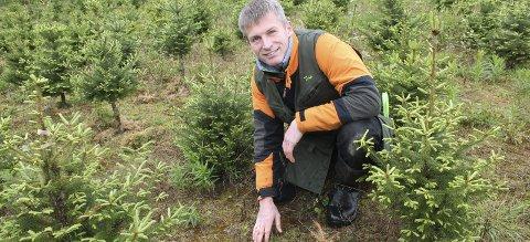 Godt jordvern: Arne Wilhelm Mohn Omsted ser på juletreproduksjon som godt jordvern. Nå håper han Grue sier ja til å omdisponere mer jord til den nye produksjonen. Foto: Kenneth Mellem