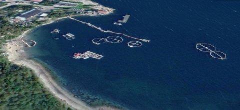 MERDER MED HVAL: Satelittbildet fra området rundt Goryachiye Ruchypå Kola, viser et område hvor den russiske marinen holder marine pattetyr. I merdene kan man se antydninger til belugahvaler.