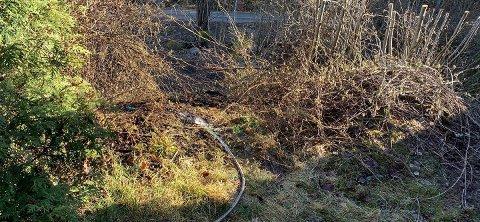KNUSKTØRT: Det er knusktørt ute og det skal lite til før det tar fyr i busker og kratt. Så ha slangen klar.