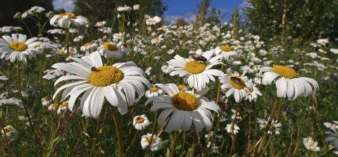 Vilt og vakkert: – Velg «insektsvennlige» planter, oppfordrer Svein Åstrøm. Han er ikke glad i hager som er for striglet og ryddig. Foto: Egil Michaelsen