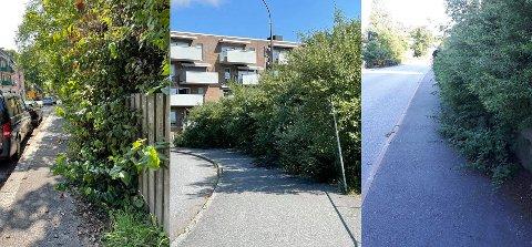 Nå er det på tide å klippe hekken. Disse bildene er tatt i Jernbanegata på Cicignon (t.v.), i Skolegata på Cicignon (i midten) og i Meieribakken på Torp (t.h.)