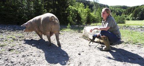 Foreviger: Hver dag går Ellen Rosnes ut på beitet til grisene og tar et bilde til den faste «spalten» «Pig of the Day» på Facebook og Instagram. Alle foto: Lena Malnes