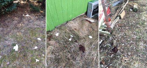 VISITTKORT: Slik så det ut ved naustet til Tom-Einar Kristoffersens familie før han ryddet opp fredag.