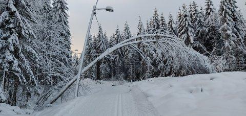 Dette treet henger i lysløypa ved Spiralen. Ivar Gaaserud Pettersen er teamleder for kommunens naturavdeling, og forteller at dette er ett av flere hundre trær som har veltet siden 2. juledag.