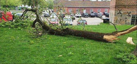 Heldigvis befant det seg ikke folk i det populære området da grenen blåste ned.