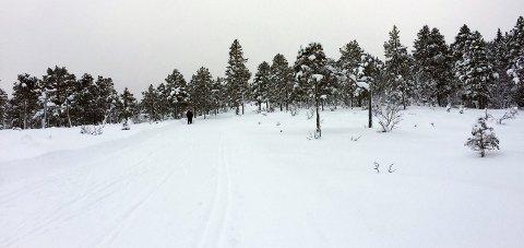 FLATT OG FINT: Turen i lysløypa på Aufles, og løypa inn til Almen, går i et flatt og fint område.