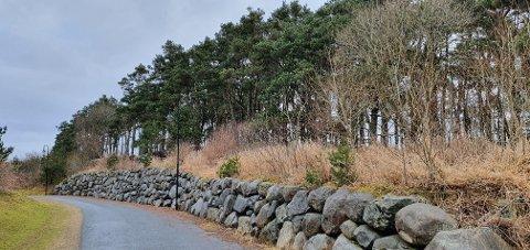 KONFLIKT: Skogen der hundeluftinga skal skje sett frå gangvegen som går mellom Frøyland og Orstad kyrkje og barnehagen. Hundeområdet vil liggja noko i frå gangvegen, og det vil ikkje vera synleg frå gangvegen.