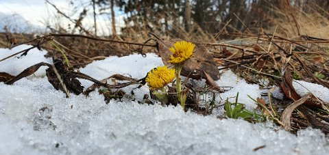 – Våren har kommet til Brundalen, skriver fotografen.