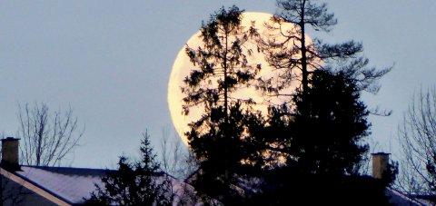 SUPERMÅNE OVER MAURÅSEN: Månen som vistes over Mauråsen på Sydskogen tirsdag så slik ut. Foto: Bjørn Auke
