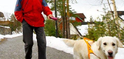 BÅNDTVANG: Drammen politistasjon får stadig inn anmeldelser på folk som ikke har kontroll på hundene sine, og som ikke overholder båndtvanget. (Arkivfoto: Stine L. Knudsen)