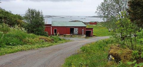 Her er fjøsen til Eivind Frantzen på Helle i Stamsund.