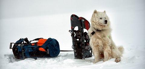 Kurs: Norske Redningshunder arrangerer vinterkurs.Arkivfoto