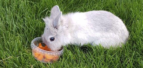 SØTE: To søte kaniner har forvillet seg bort, og er tatt hånd om på Tofte.