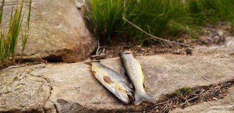 Mattilsynet advarer folk om å spise ørret fra Lavangsvatnet  i Skånland etter nye undersøkelser.