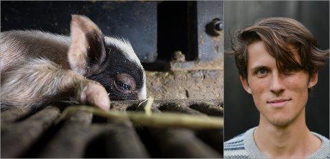 VARSLER: Tor Grobstock i Nettverk for dyrs frihet sier organisasjonen kan avsløre dårlig dyrevelferd for gris i hele landet.