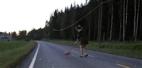 SOPTE OPP: Maritha Pavestad ryddet etter rådyrpåkjørselen på Nyveien i går kveld. Sjåføren stakk av etter trafikkuhellet.