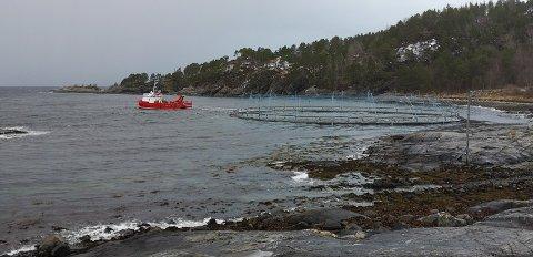 Utpå lørdagen ble ringen (toppen av en oppdrettsmerd) hentet tilbake i motvind over fjorden. (leserfoto)