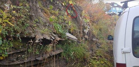 Dette bildet ble tatt under kommunens innmåling i høst, og siden oversendt Krogsæters advokat.