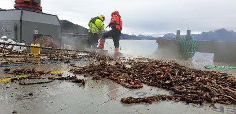 Det er firmaet Esea Marine som gjør selve jobben med å hente opp forlatte blåskjellanlegg.