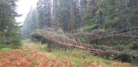 Flere trefall over strømledningene kuttet strømmen til mange beboere i Sylling-Øverskogen lørdag. Litt etter klokken 11.00 har alle fått strømmen tilbake.